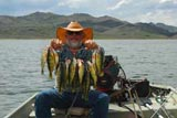 Perch caught at Wildhorse